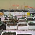 2016年种植记录