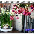 2018春节的花