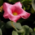 种出的花儿