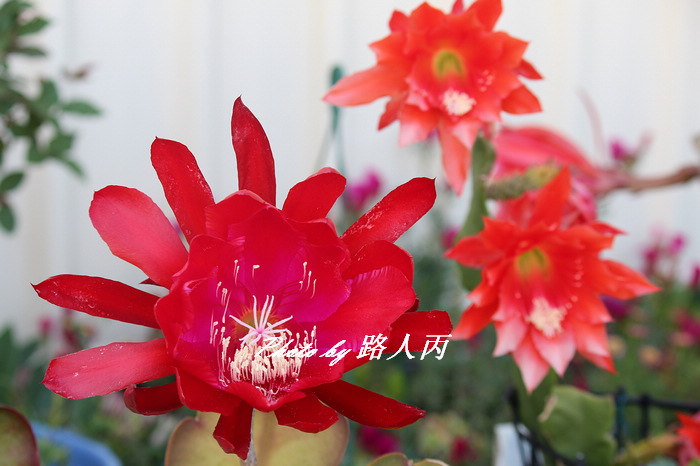 A IMG_9808.jpg