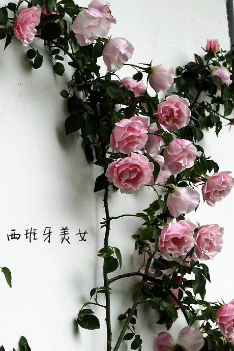 IMG_1986_副本.jpg