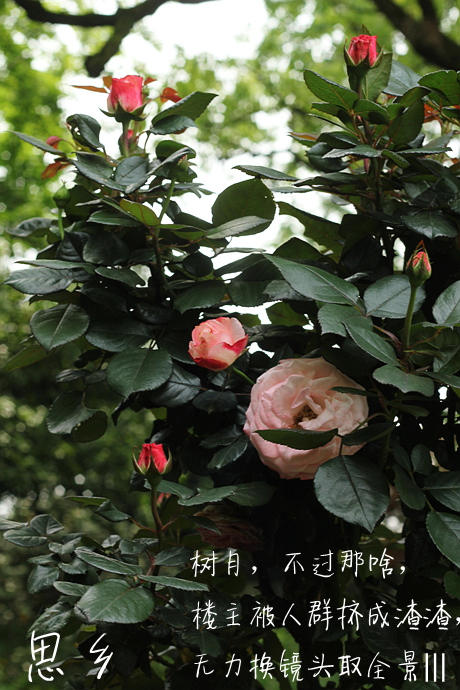 IMG_1987_副本.jpg