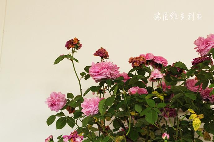 IMG_1991_副本.jpg