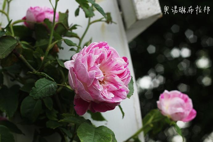 IMG_2033_副本.jpg
