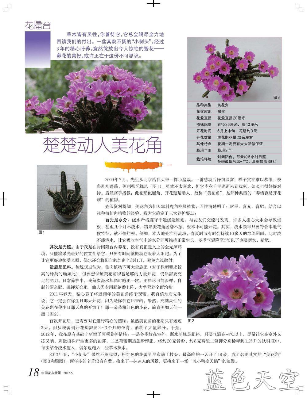 水印美花角 18_1.jpg
