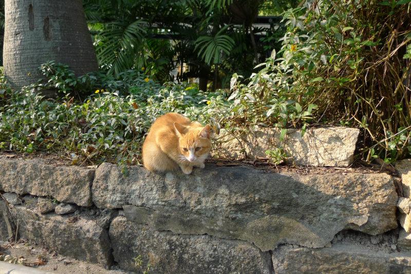 慵懒的小猫咪