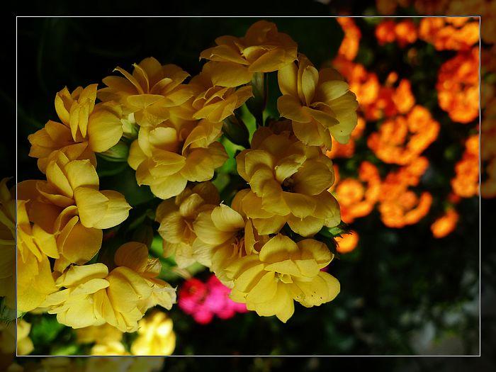 nEO_IMG_P1090369.jpg