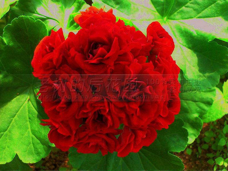 043320yrpz4cvpc4dph1ug.jpg