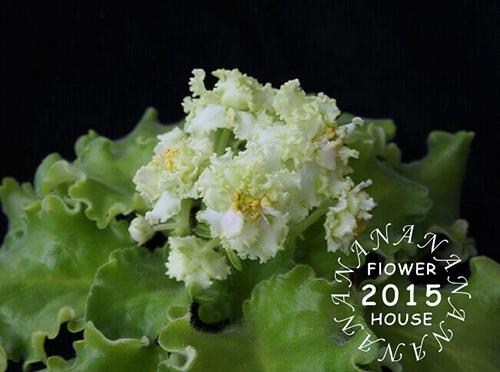 绿菠菜.jpg