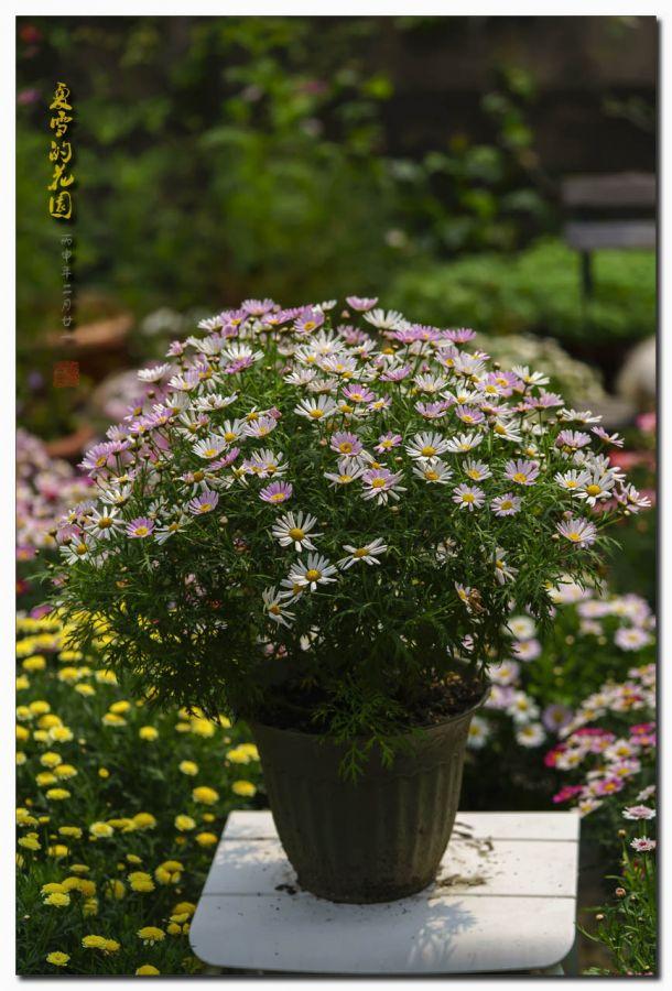 夏雪的花园(阳春三月----花满园)
