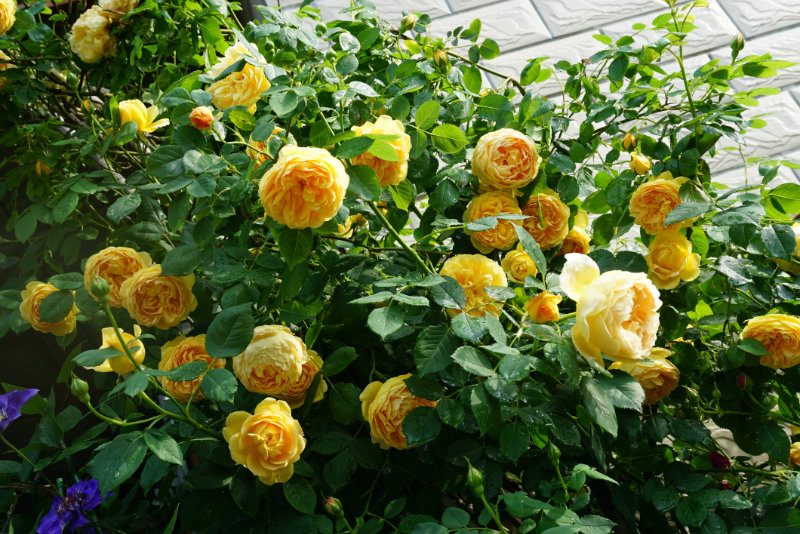 种一院繁花,许一世安暖