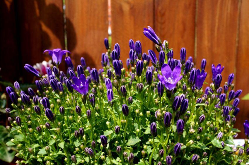 蓝紫色,小花密集控,完败!