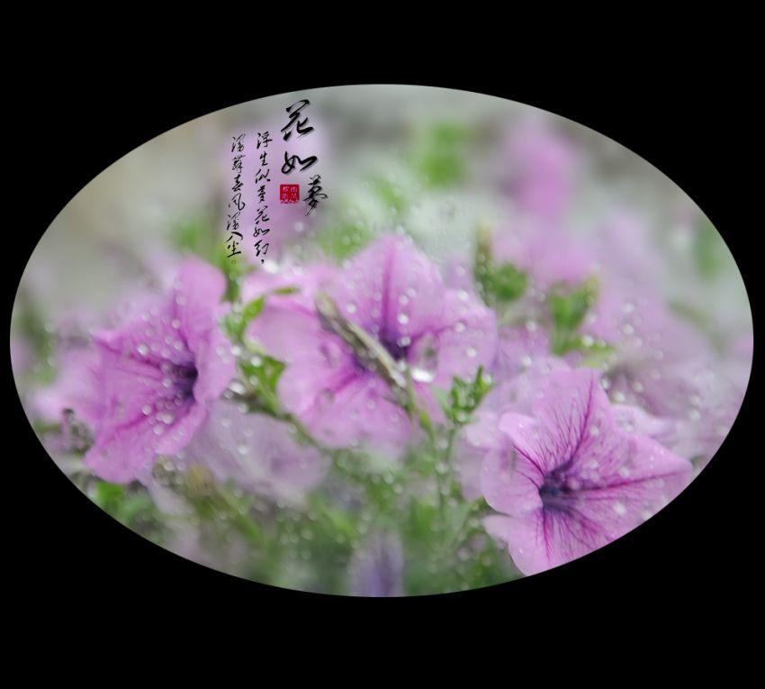 花如梦1.jpg