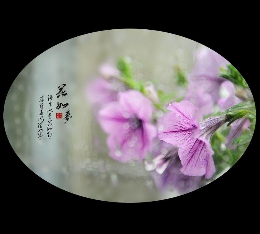 花如梦3.jpg