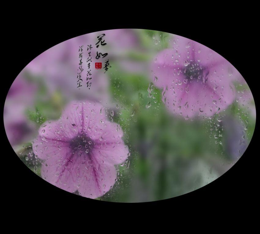 花如梦2.jpg