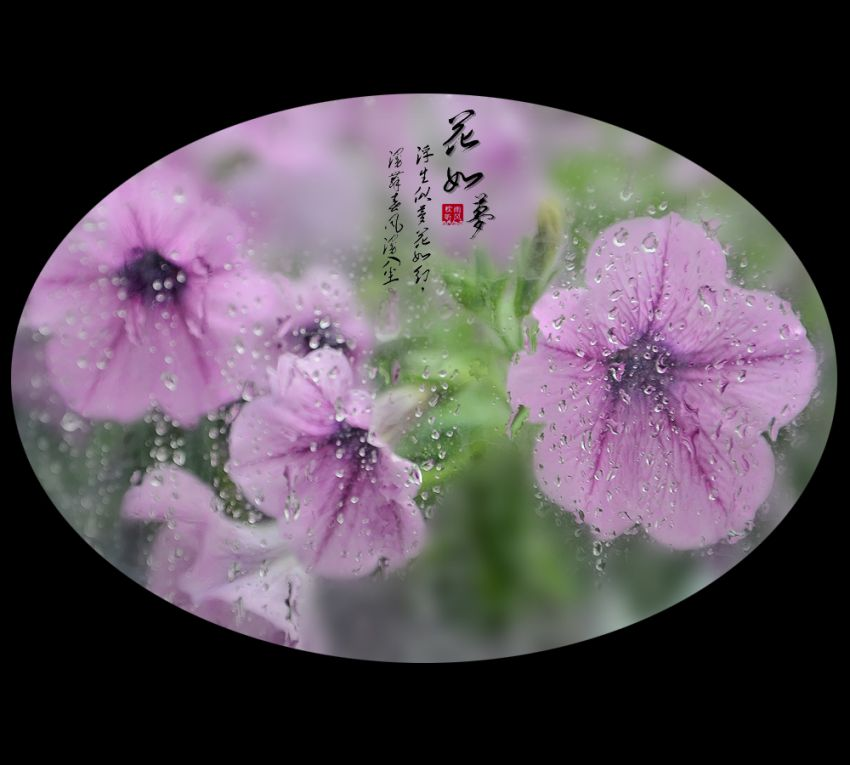 花如梦11.jpg