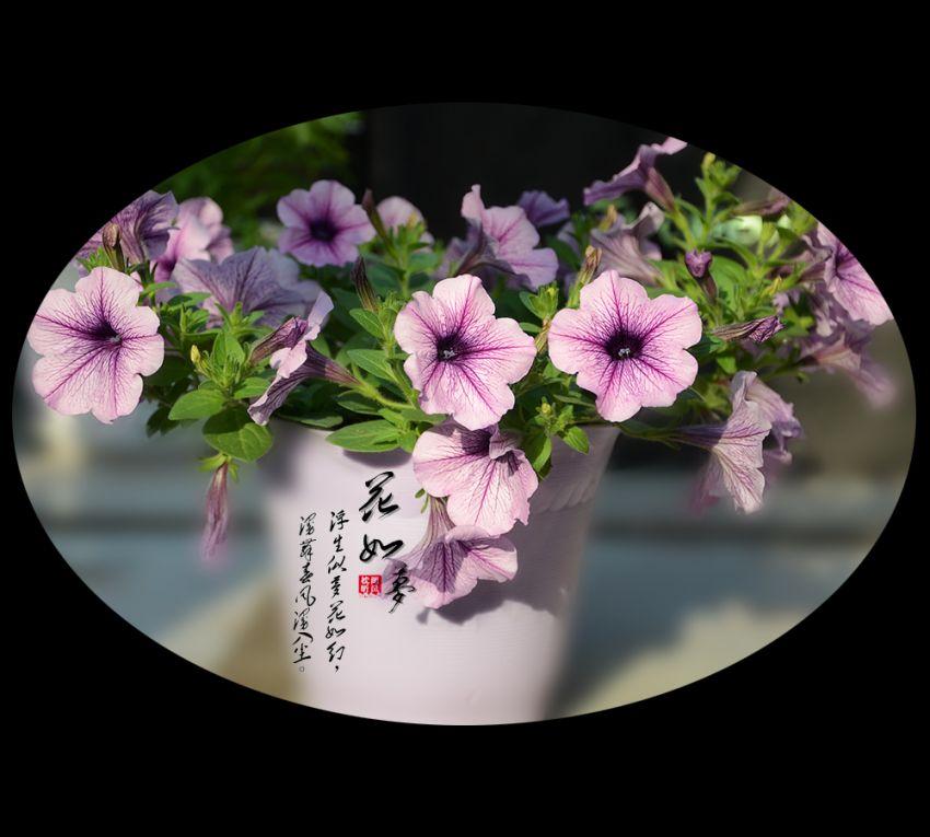 花如梦13.jpg