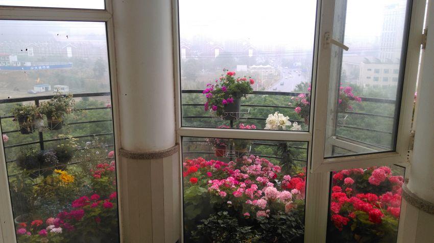 窗内看花.jpg