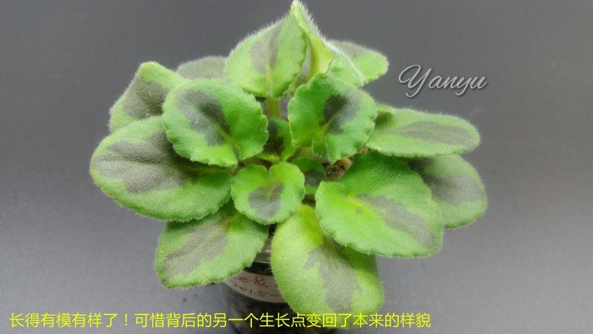 a05_副本_wm.jpg
