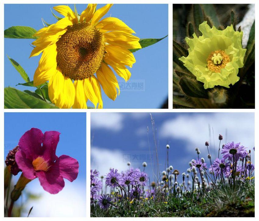 冬季回望高原系列之一:高原上的垂头花