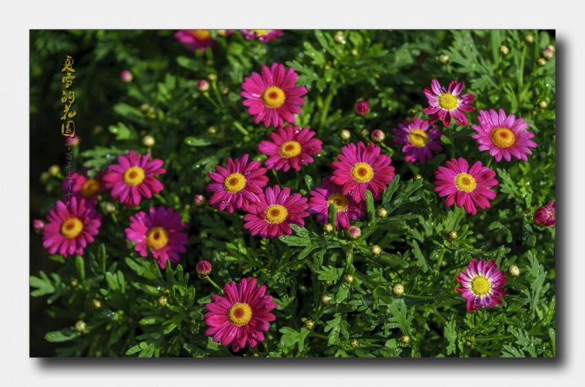 花园0.jpg