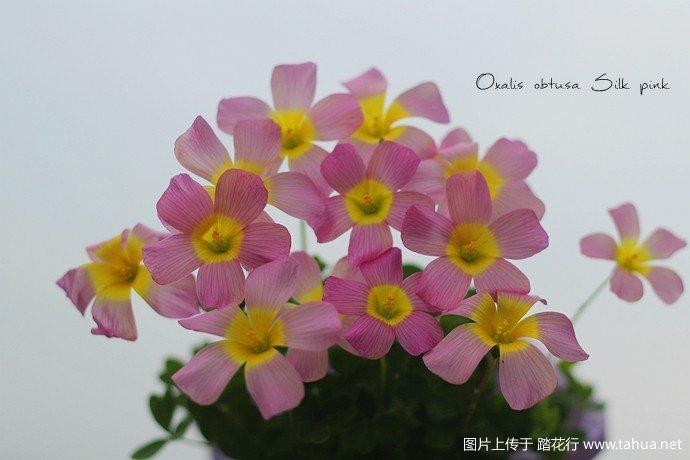 IMG_0544_副本.jpg