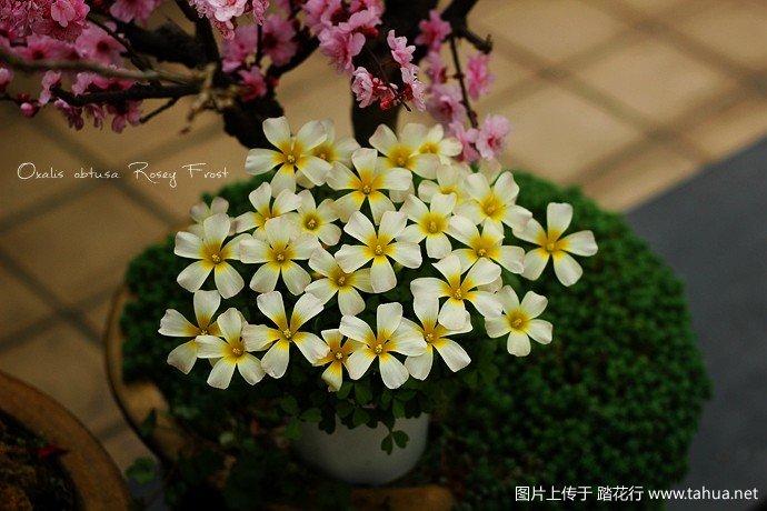 IMG_0608_副本.jpg