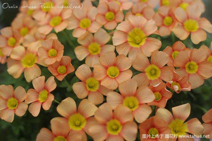 IMG_1440_副本.jpg