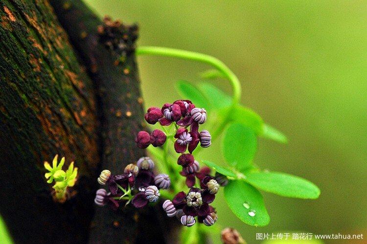 北纬30° 春天野花10种
