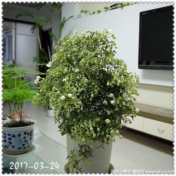 P1100147_副本.jpg