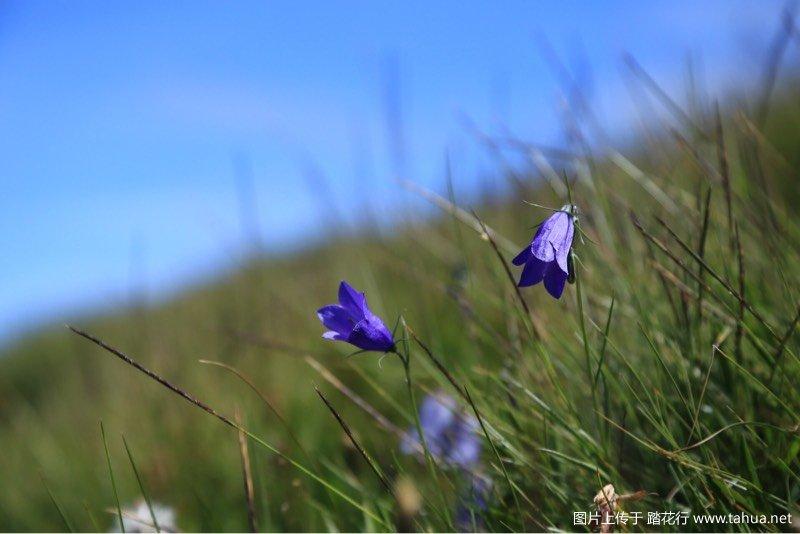 漫生花草的山坡