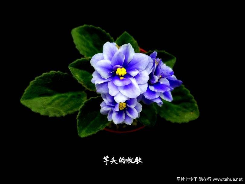 201240evd7zd7ewcq8suve.jpg