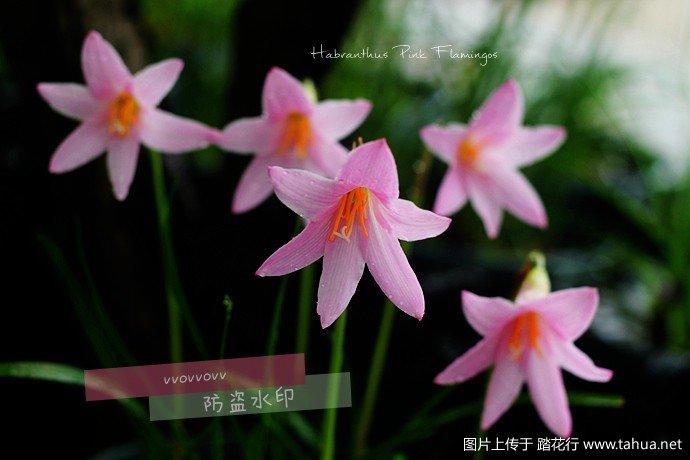 IMG_5945_副本.jpg