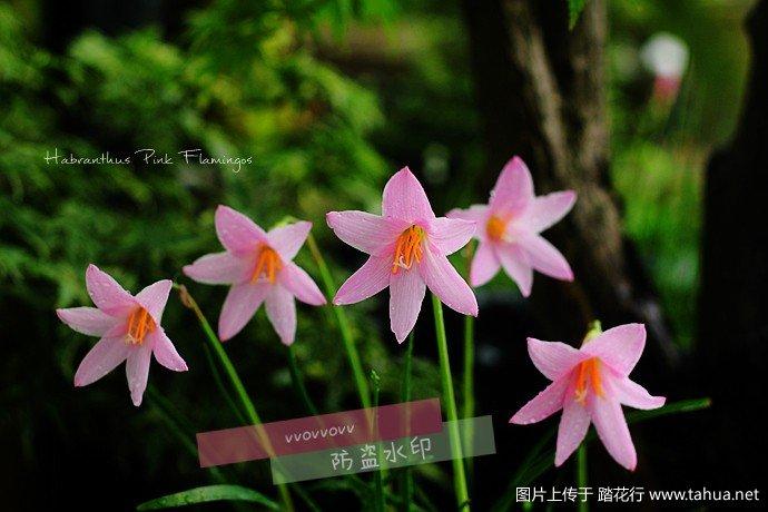 IMG_5954_副本.jpg