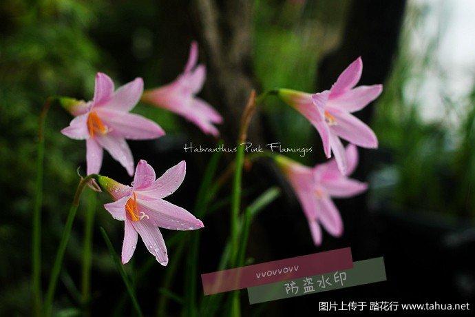 IMG_5968_副本.jpg