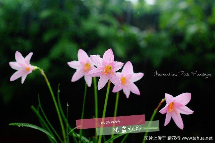 IMG_5990_副本.jpg
