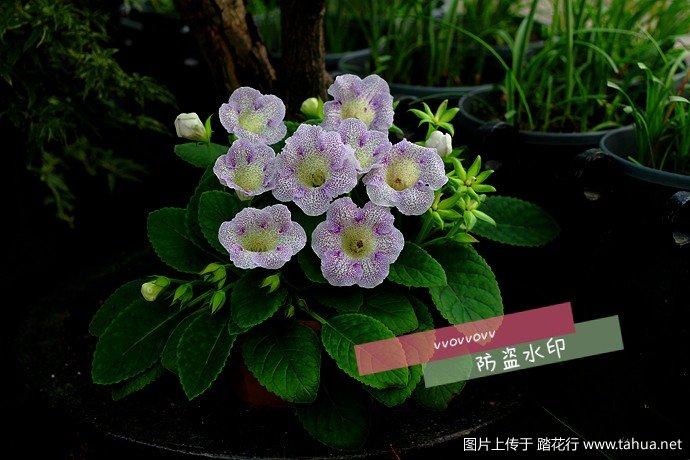 IMG_6042_副本_副本.jpg