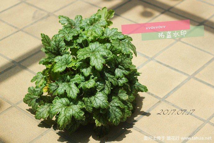 IMG_6518_副本.jpg