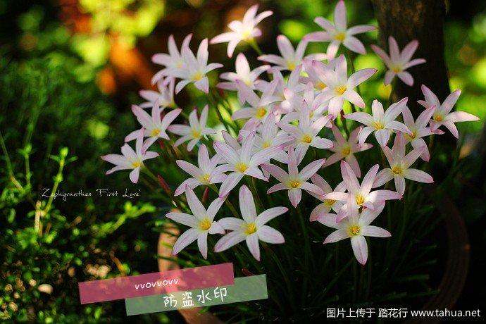 IMG_7915_副本.jpg