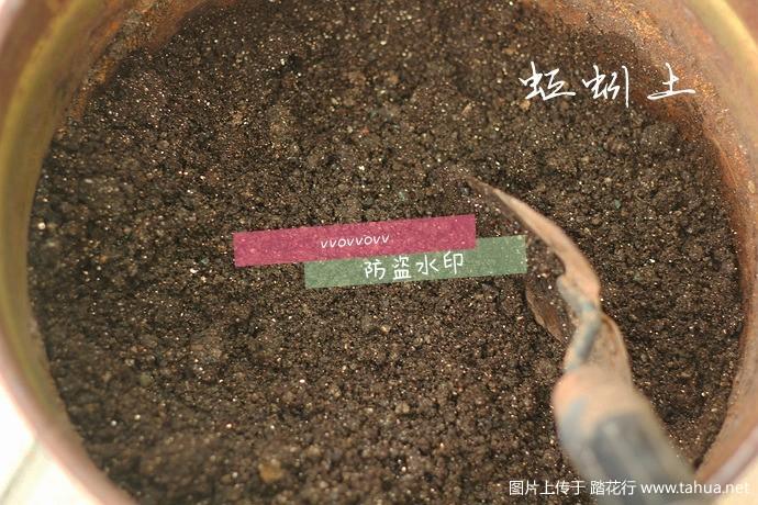IMG_8154_副本.jpg