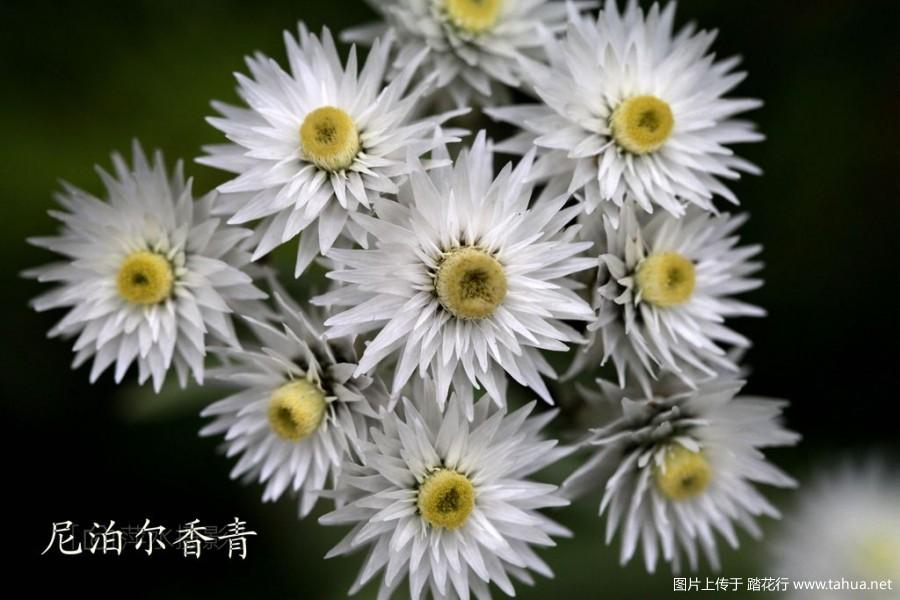 巴郎山 430_副本_副本.jpg
