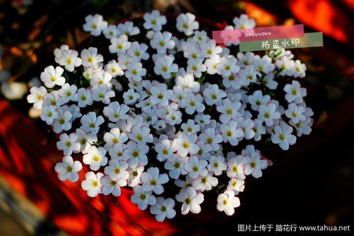 IMG_4034_副本.jpg