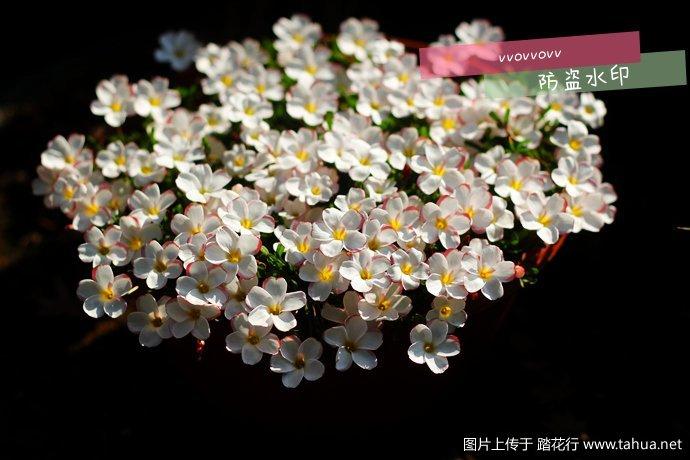 IMG_4055_副本.jpg