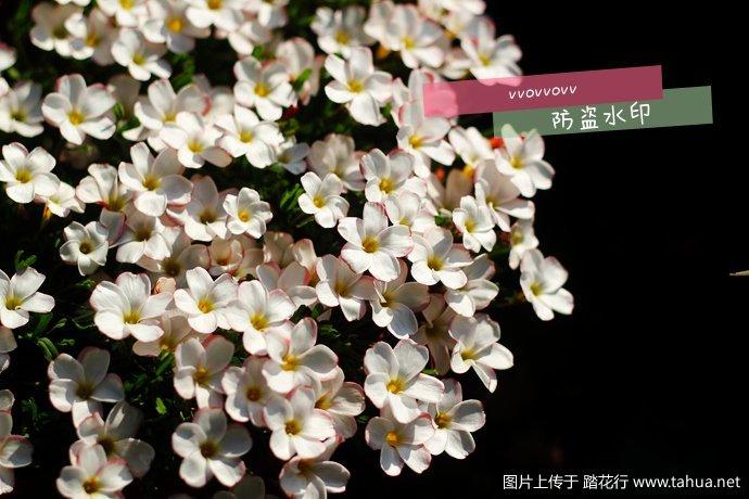 IMG_4079_副本.jpg