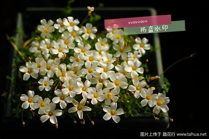 IMG_5101_副本_副本.jpg