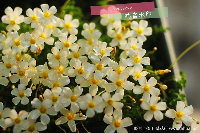 IMG_5105_副本_副本.jpg