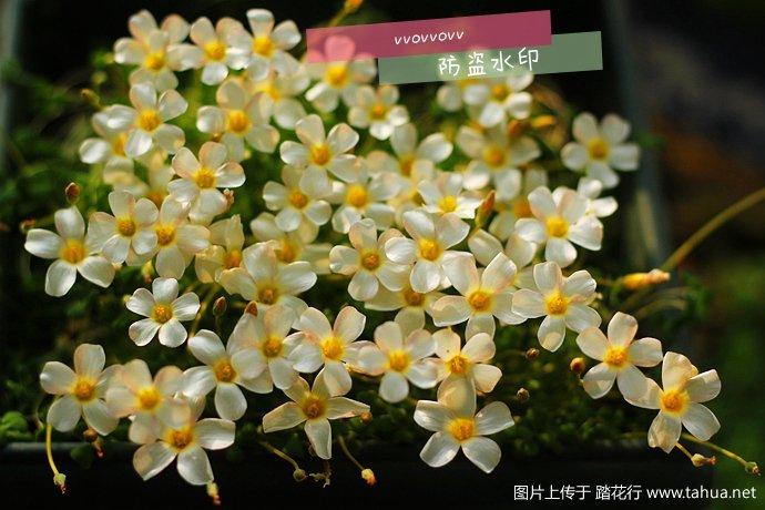 IMG_5108_副本_副本.jpg