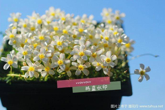IMG_5161_副本.jpg