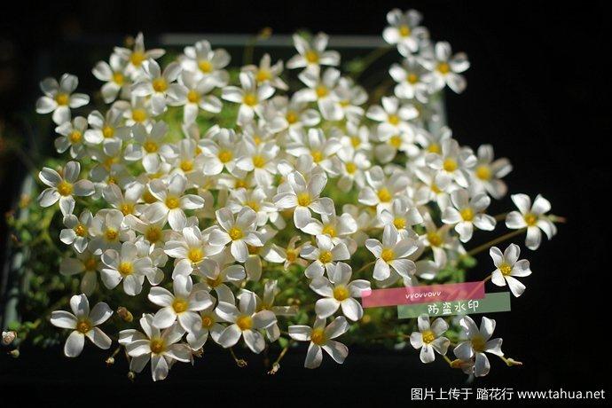 IMG_5338_副本.jpg