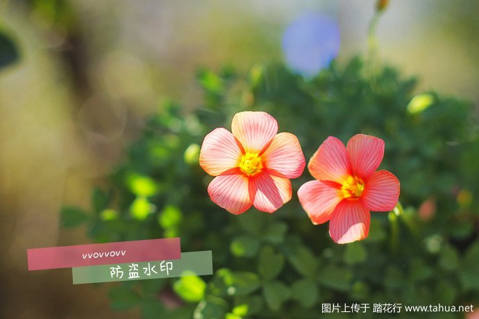 IMG_5256_副本.jpg